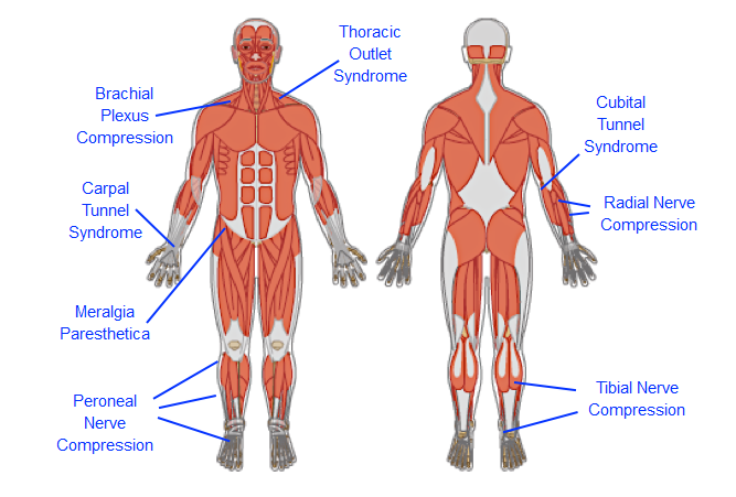 Diagram Body Parts